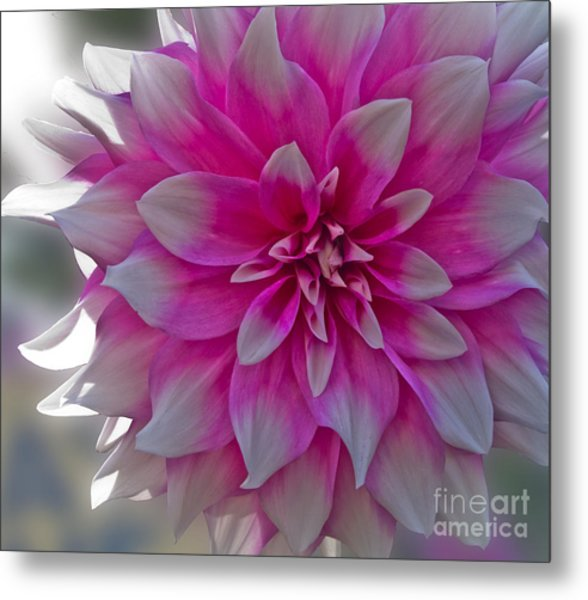 Suttle Surprise Metal Print