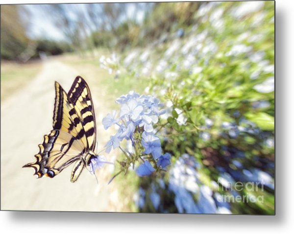 Swallowtail Butterfly In Spring Metal Print