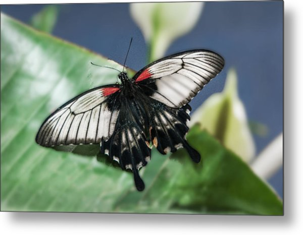 Metal Print featuring the digital art Swallowtail Butterfly by Mae Wertz