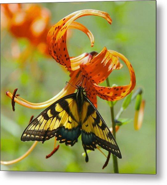 Swallowtail Butterfly3 Metal Print