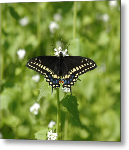 Metal Print featuring the photograph Swallowtail by David Armstrong