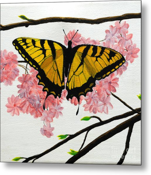 Swallowtail In Cherry Blossoms Metal Print