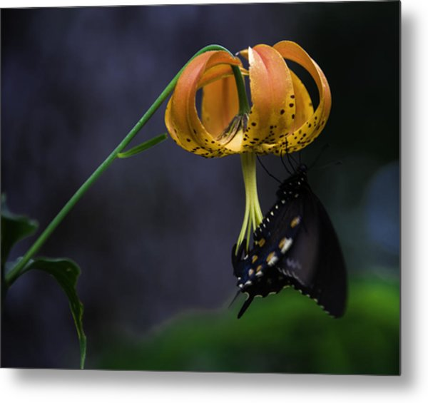 Swallowtail On Turks Cap Metal Print