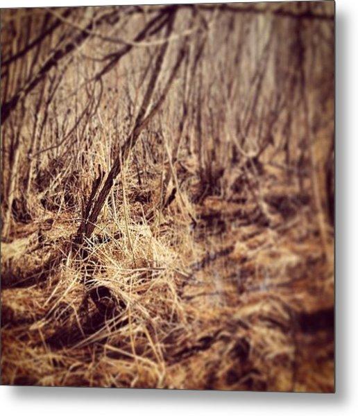 Swamp In Spring Metal Print