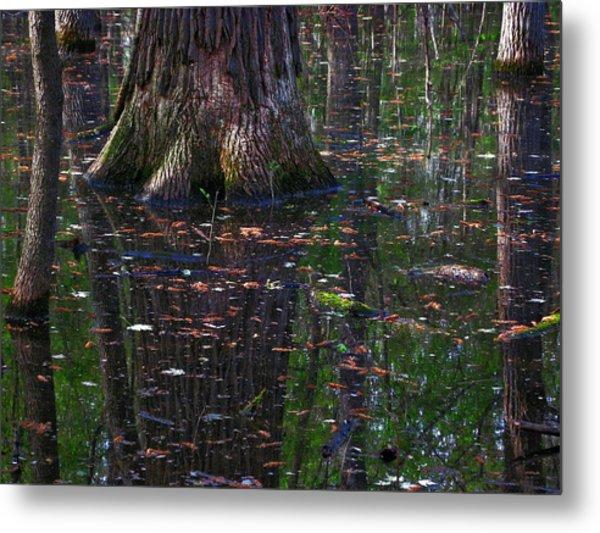 Swamp Metal Print