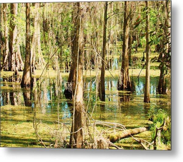 Swamp Wading 1 Metal Print by Van Ness