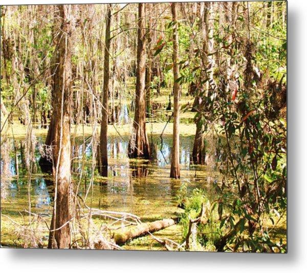 Swamp Wading 2 Metal Print by Van Ness