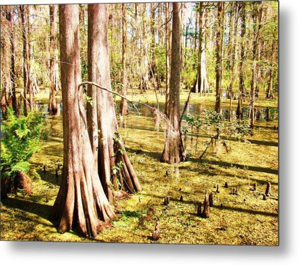 Swamp Wading 3 Metal Print by Van Ness