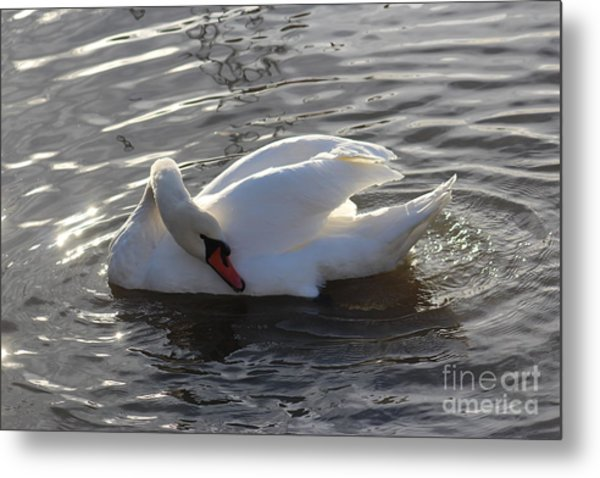 Swan By The Lake # 2 Metal Print by Jeanette Rode Dybdahl