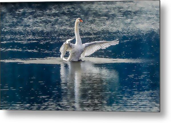 Swan Glory Metal Print