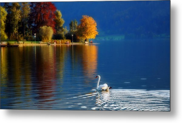 Beautiful Autumn Swan At Lake Schiliersee Germany  Metal Print