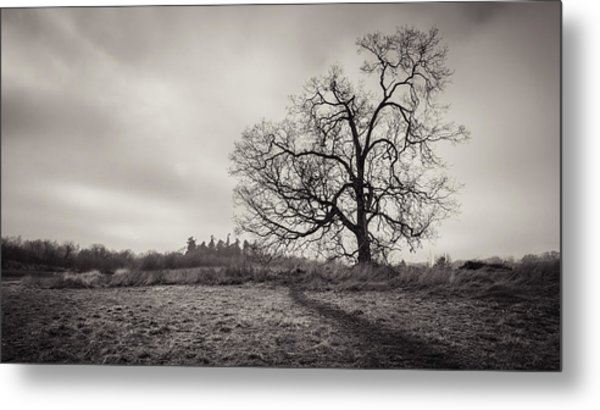Swan Lake Oak Metal Print