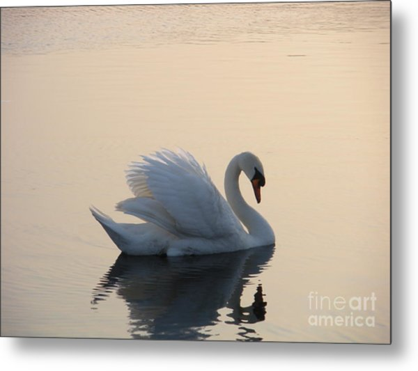Swan On A Lake Metal Print by Sophia Elisseeva