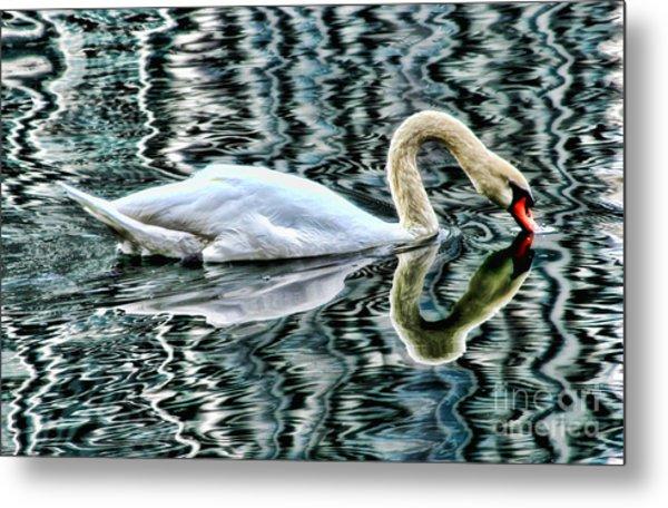 Swan On Lake Eola By Diana Sainz Metal Print