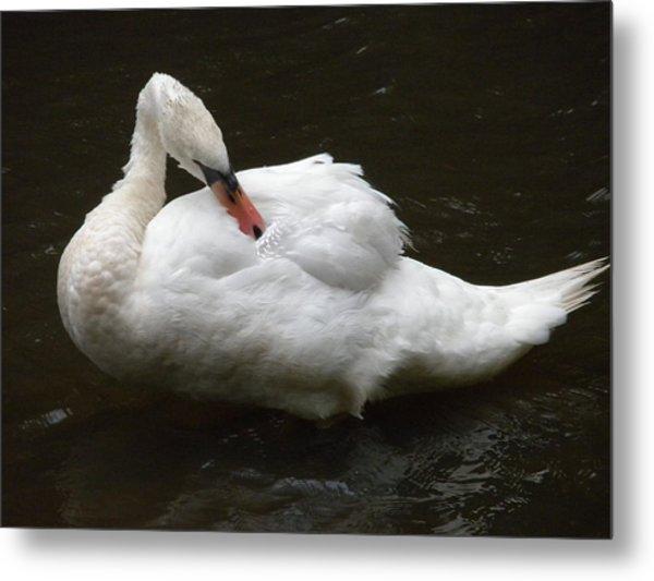 Swan One Metal Print