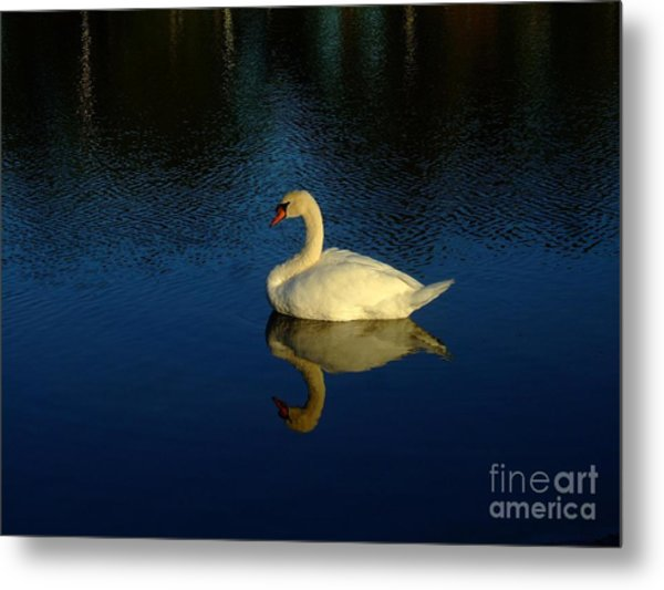Swan Reflection Metal Print