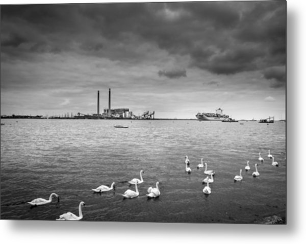 Swans And Ships. Metal Print by Gary Gillette