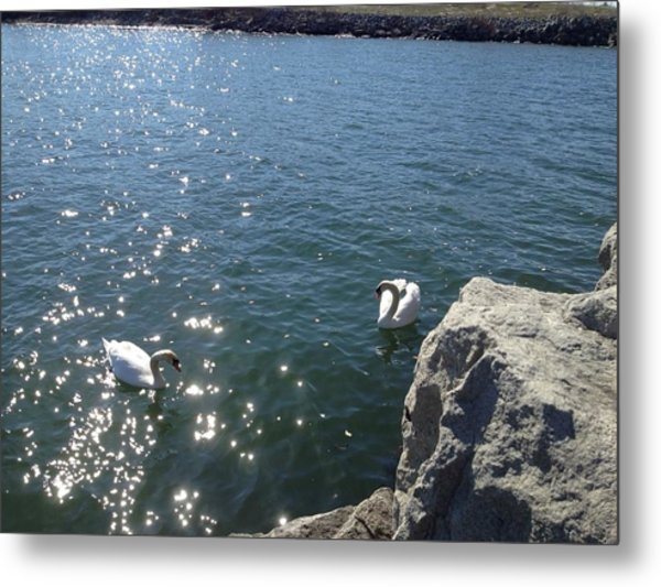 Swans And Sparkles Metal Print