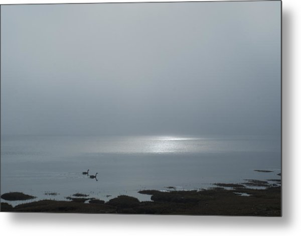 Swans At Sunrise Metal Print