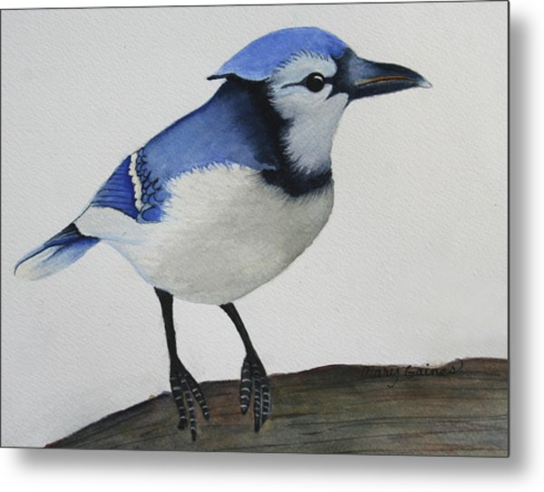 Sweet Blue Jay Metal Print by Mary Gaines
