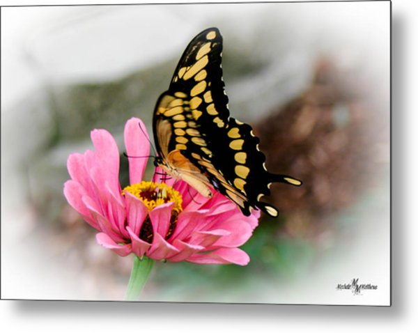 Sweet Delicacy Metal Print