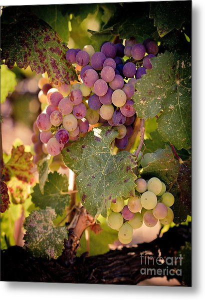 Sweet Grapes Metal Print