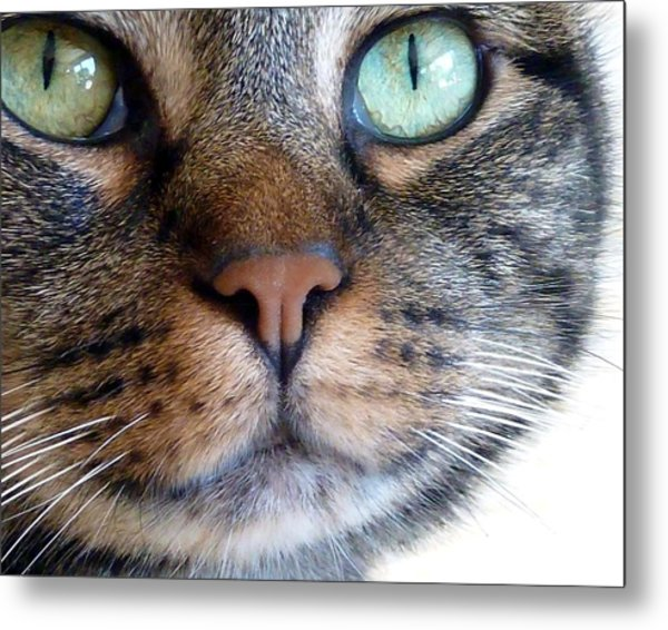 Sweet Green Eyes Metal Print