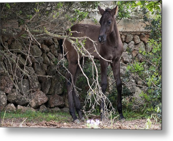 sweet heart - A tender foal wait his beloved mother  Metal Print