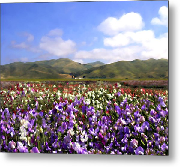 Sweet Peas Galore Metal Print
