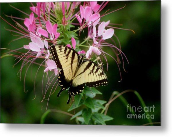 Sweet Swallowtail Metal Print