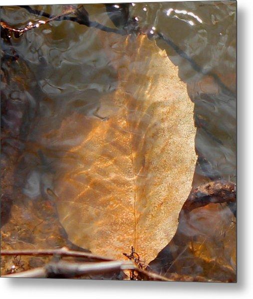 Swimming Leaf Metal Print