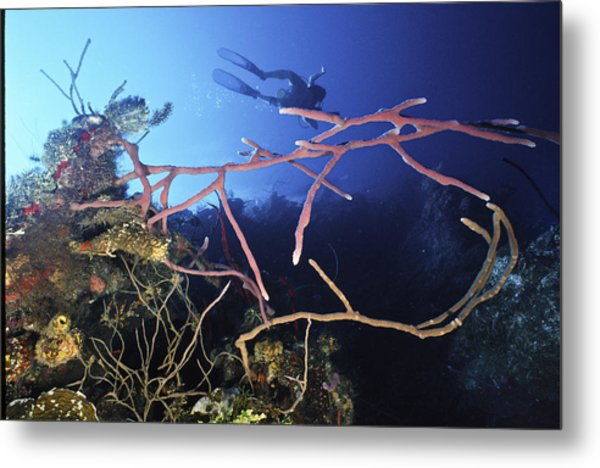 Swimming Over The Edge Metal Print
