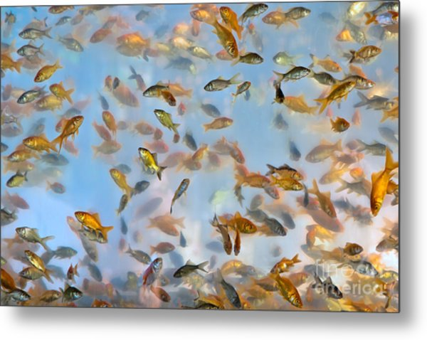 Swimming With The Fishes Metal Print