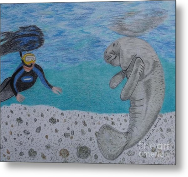 Swimming With The Manatee Metal Print
