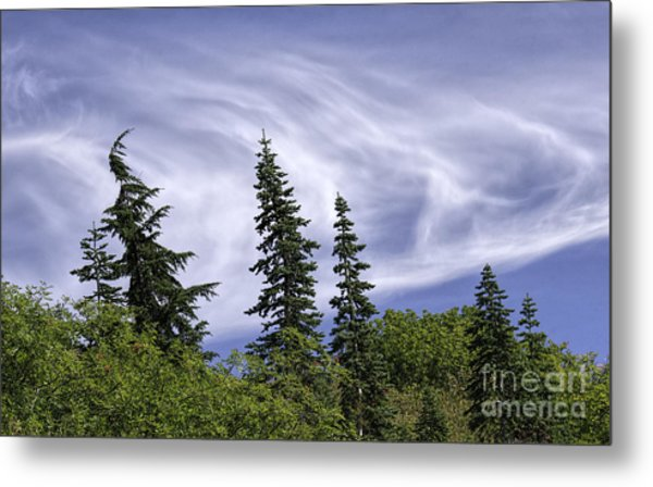 Swirling Clouds Crooked Trees Metal Print