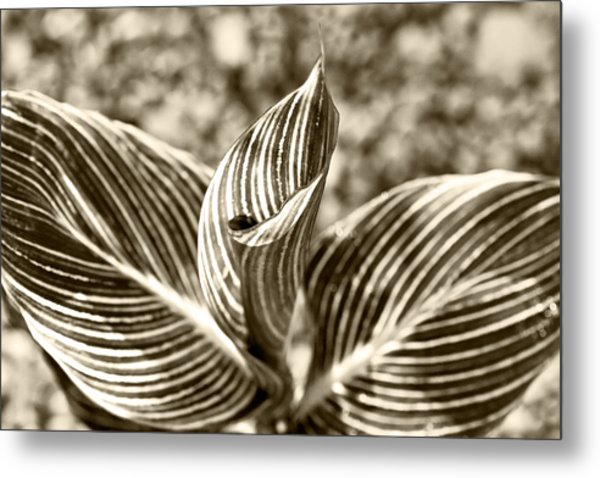 Swirls And Stripes Metal Print