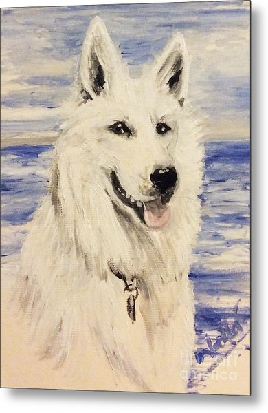 Swiss Shepherd Metal Print