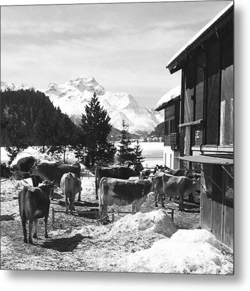 Snowy Springtime In St. Moritz Metal Print