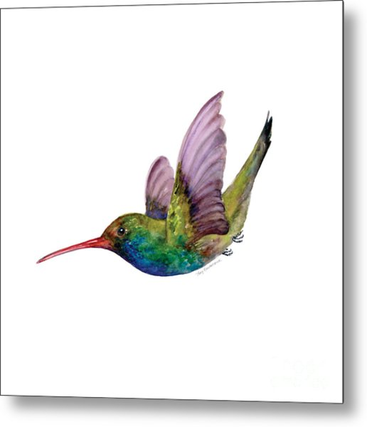 Swooping Broad Billed Hummingbird Metal Print