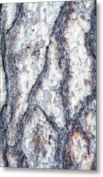 Sycamore Bark Abstract Metal Print