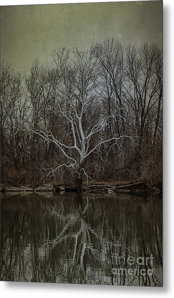 Sycamore Dancer Metal Print