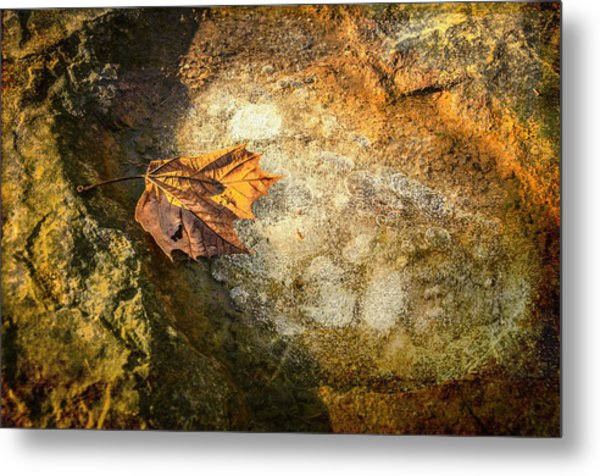 Sycamore Leaf In Ice Metal Print
