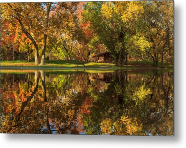 Sycamore Reflections Metal Print
