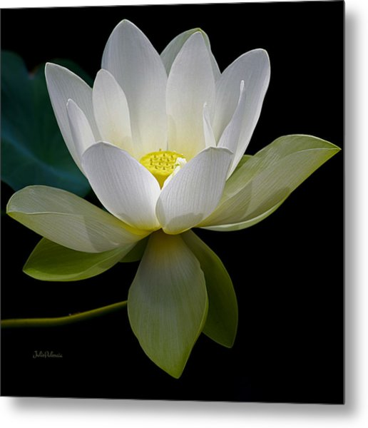 Symbolic White Lotus Metal Print