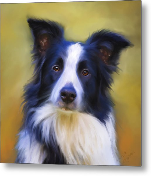 Beautiful Border Collie Portrait Metal Print