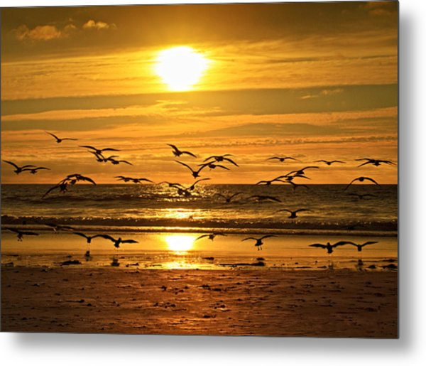 Take Flight At Sunset Metal Print by Donna Pagakis