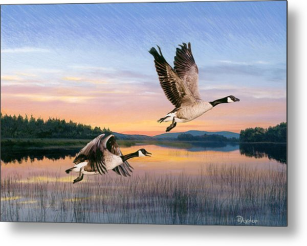 Taking Flight Metal Print by Brent Ander