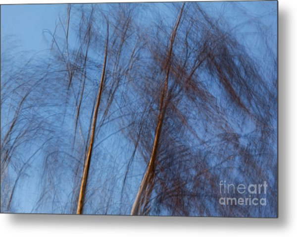 Talking Trees Metal Print