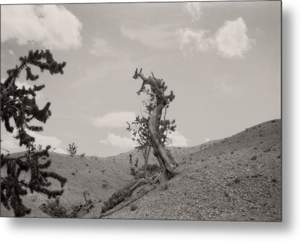 Talking Trees In Bryce Canyon Metal Print