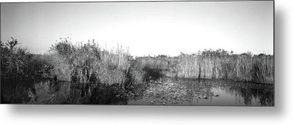 Tall Grass At The Lakeside, Anhinga Metal Print
